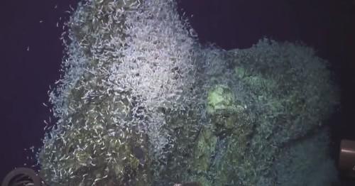 Watch a quake startle a swarm of deep sea creatures