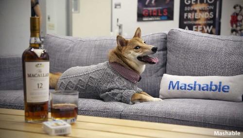 Menswear Dog's 10 Fetching Fashion Tips