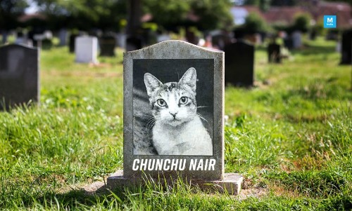 The Cat 'Chunchu Nair' Has Passed Away And the Internet Is Mourning With Memes