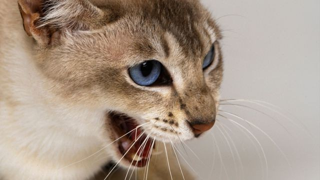 Man calls 911 when his cat won't let him back inside the house