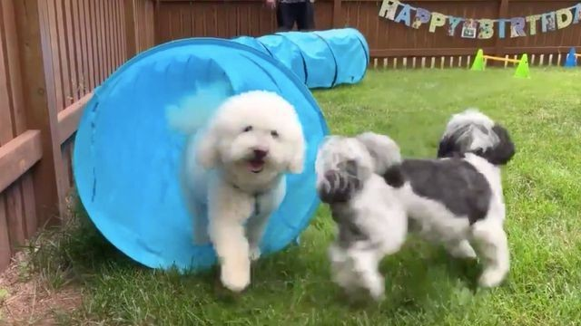 Dog's birthday party puts most human parties to shame