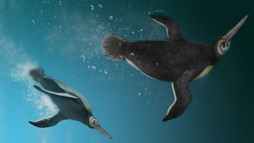 Paleontologists Discovered Prehistoric Fossils That Link Giant Penguins To Their Modern Descendants - Science