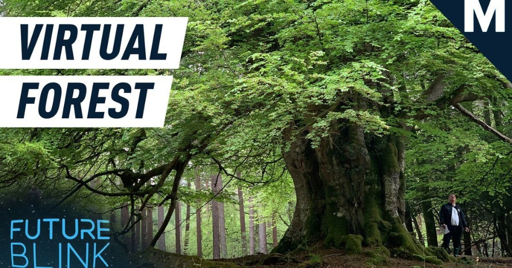 Take a virtual tour through this spooky forest