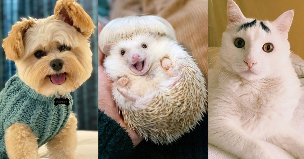 The 20 Cutest Animals of 2020 to End the Year on a High Note