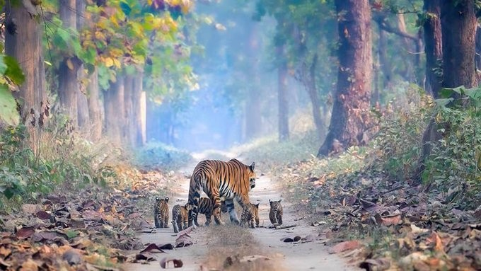 India's Tiger Population Is On The Rise And This Picture Is Proof! - Science