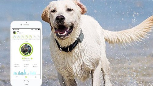Keep tabs on your pet 24/7 with the Whistle 3 tracker — on sale for $74.95
