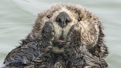 These comedy wildlife photography finalists are a delight to behold