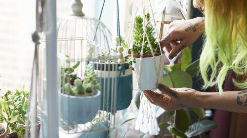 How to actually find the right kind of light for your plants
