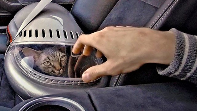 Your cat will be flying in style in this new spaceship-style pet carrier