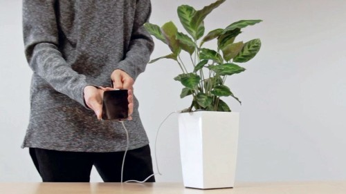 Your house plant could soon charge your phone