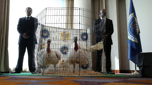 The presidential turkey pardon is one of America's most misremembered traditions