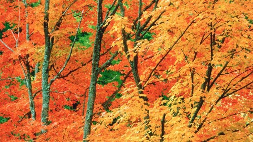 This map is your interactive guide to fall foliage