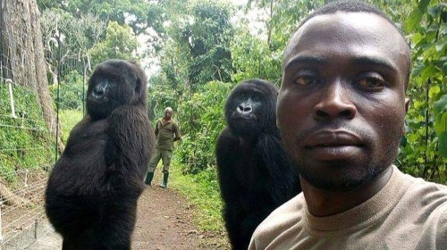 See Photos: Rangers' Selfies With Gorillas Are #Goals