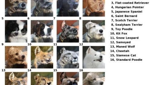 Deepfake your pet with a fun, not-at-all terrifying algorithm