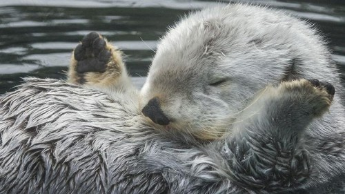 Eddie the famous horny otter dies at 20