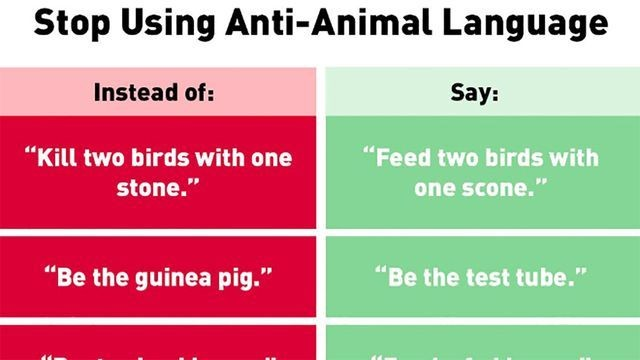 The internet mocks PETA after it suggests we stop using 'anti-animal' idioms
