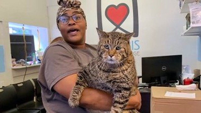 This 26-pound cat is in need of a forever home