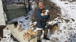 This woman is raising 200 dogs she saved from death in South Korea