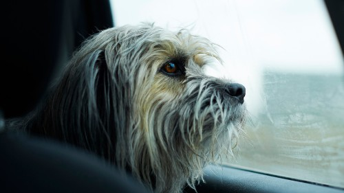 Tesla's new 'dog mode' tells passersby that your pet is OK in the car