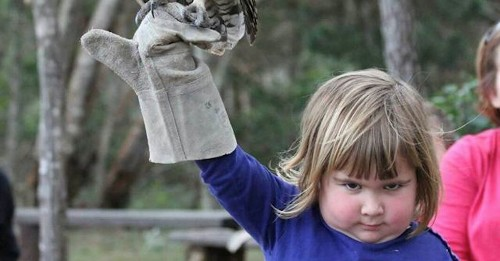 Diabolical little girl held an owl and the Internet had a Photoshop field day