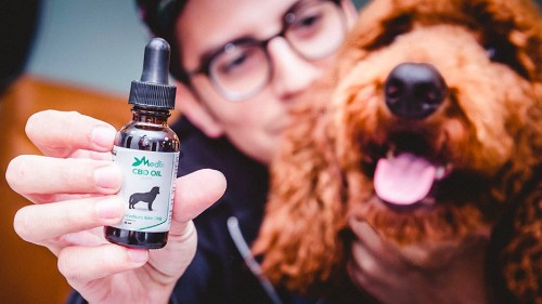 Treat your dog with this bacon-flavored CBD oil for pets, on sale for 29% off