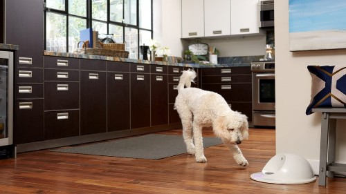 Now your dog can play video games, too