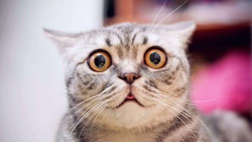 Cats Too Have Facial Expressions But Not Everyone Can Read Them, Reveals Study - Science