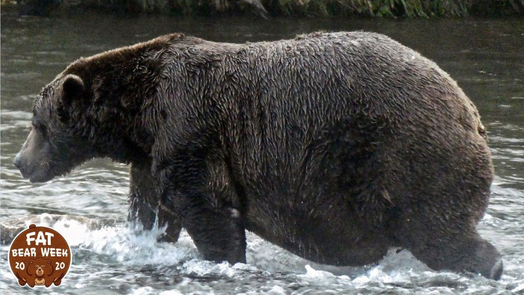 'All The Bears Are Fat This Year'