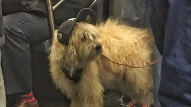 Cool dog rides a skateboard on the subway just like you've always dreamed