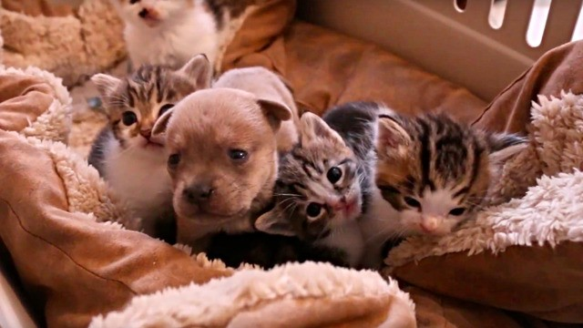 Newborn puppy that lost its mom finds unusual foster family