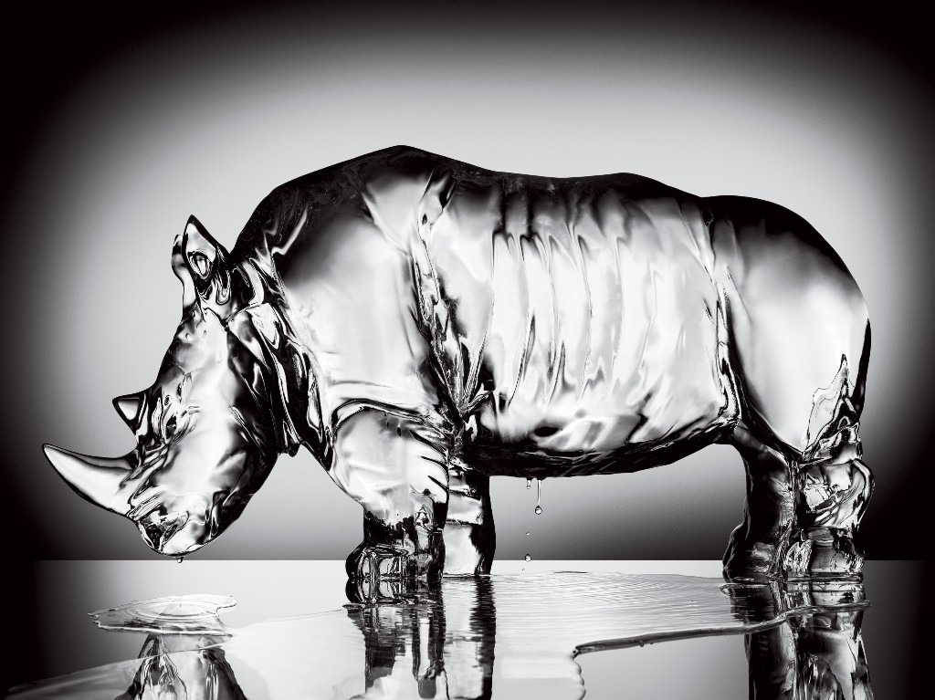 Animal Kingdom - cover