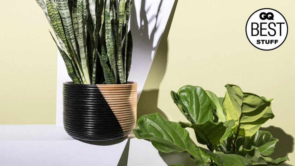 12 Houseplants That Even You Can't Kill