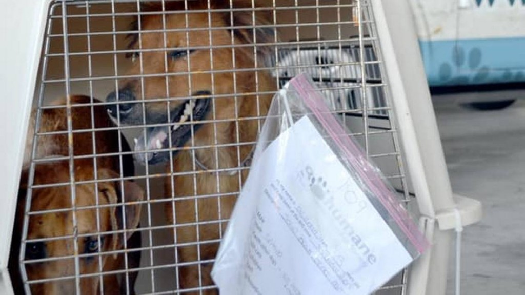Bahamas pets spared by Hurricane Dorian will be available for adoption in South Florida