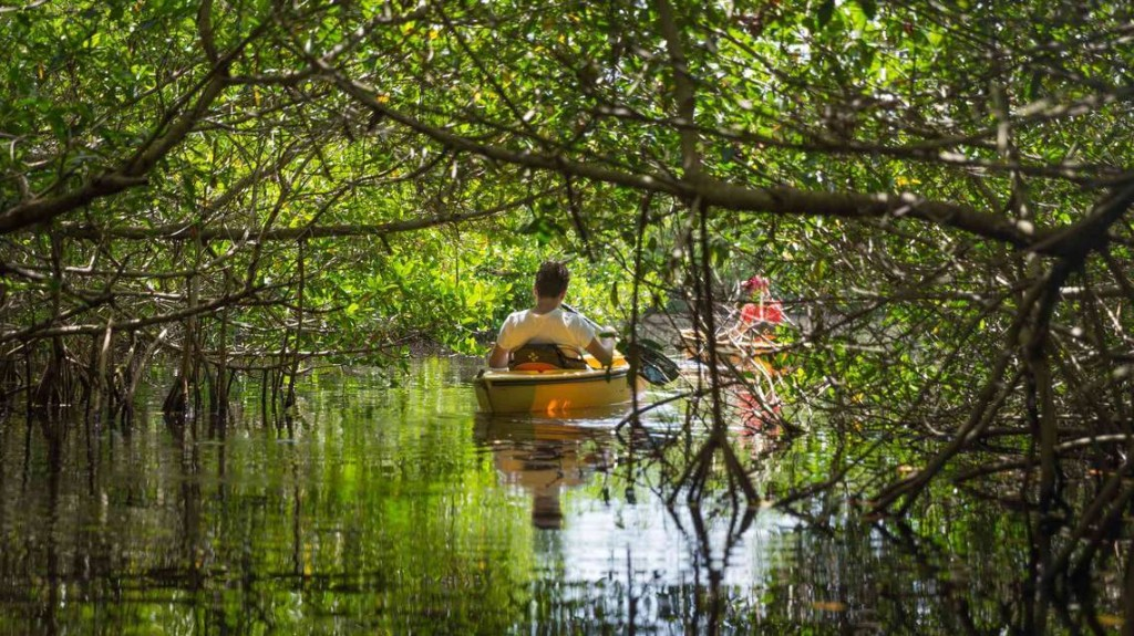 If we treasure the Everglades, we must protect its health the way we are protecting ours   Opinion