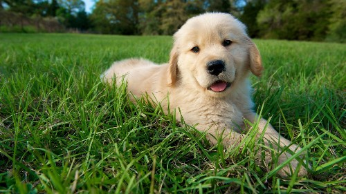 Happy National Dog Day! Here Are 13 Puppy GIFs To Flood Your Eyeballs With Cuteness
