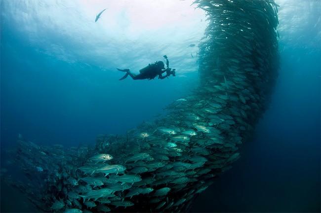 Thousands of Swimming Fish Create Huge Underwater Spirals