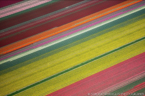 Beautifully Abstract Aerial Views of Colorful Tulip Fields in The Netherlands