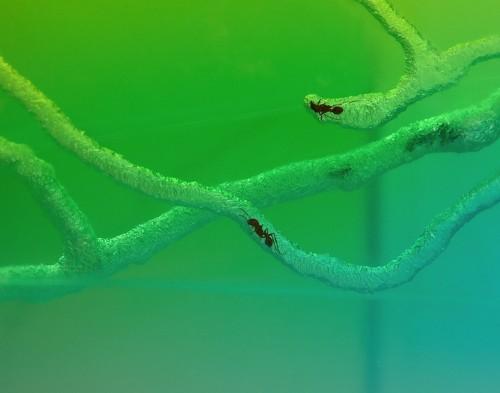 "Live Ants Create ""Sculpture"" Tunnels in New Plexiglass Art"