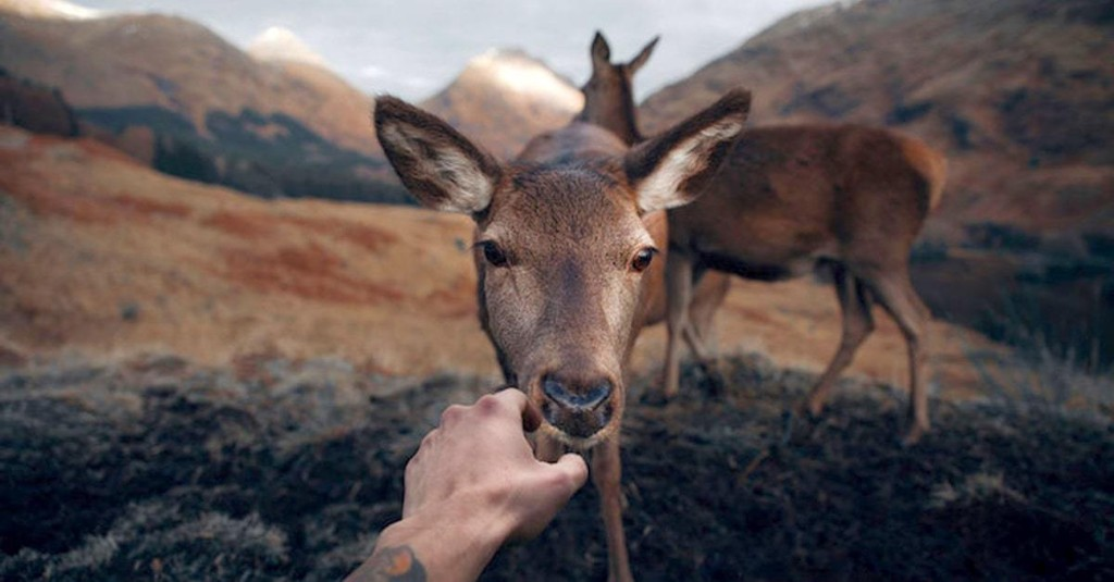 Photographer Captures Magic of the Scottish Countryside as Wild Animals Get Shockingly Close