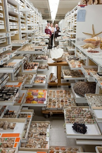 Rare Behind-the-Scenes Look at the Vast Collection of the Smithsonian's National Museum of Natural History