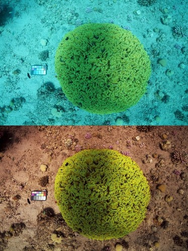 Researchers Create Algorithm That Can Erase Water From Underwater Photos