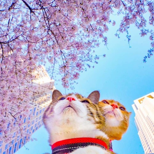 Two Adorably Adventurous Cats Travel All Around Japan with Their Human