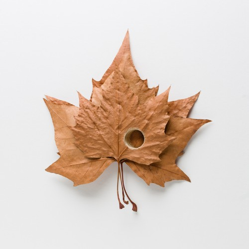Artist Transforms Brittle Leaves into Delicate Crocheted Sculptures