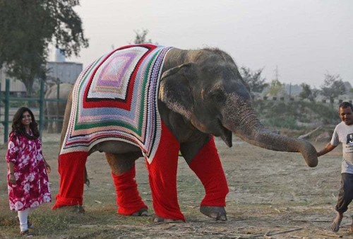 Compassionate Villagers Make Giant Sweaters to Keep Rescue Elephants Warm