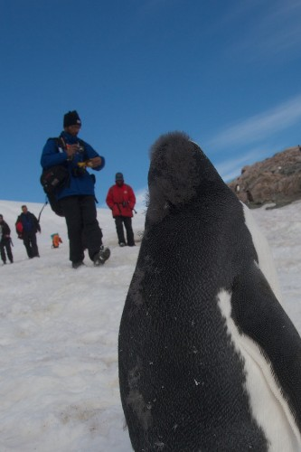 An Incredible Encounter with a Friendly Penguin in Antarctica