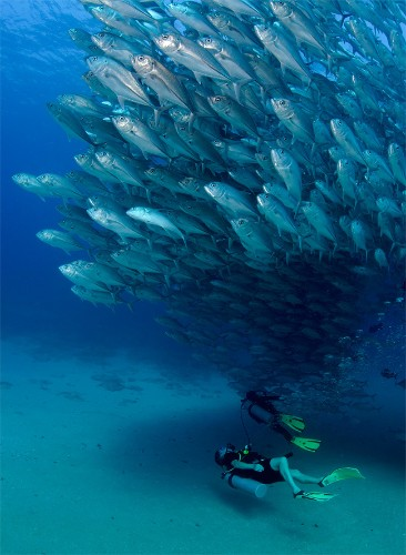 Thousands of Swimming Fish Create Huge Underwater Spirals