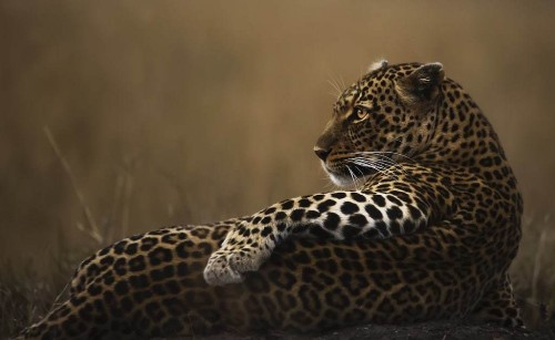 Wildlife Photographer of the Year People's Choice Award Shortlist