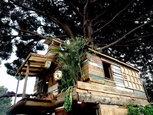 Giant Tree House Built With Recycled Materials