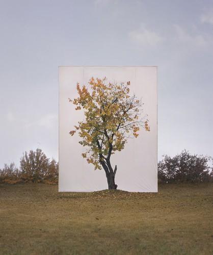 Myoung Ho Lee's Simply Beautiful Tree Portraits