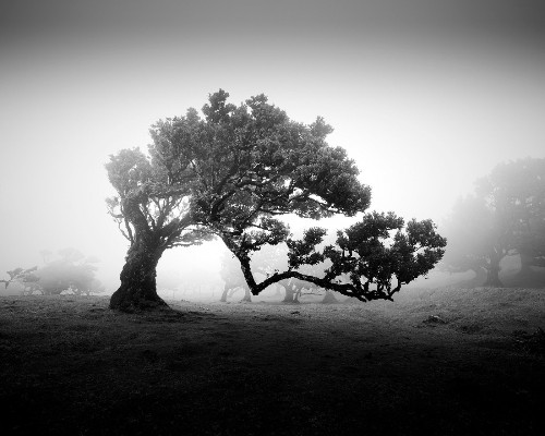 Black and White Photos Capture the Eerie Enchantment of Madeira's Ancient Trees